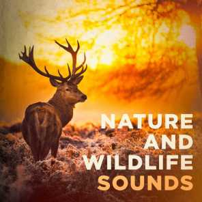 Nature Sound Collection, Sons da Natureza, Listen and Relax