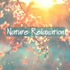 Nature Sounds, Rain for Deep Sleep and Nature Sound Collection