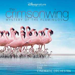 The Cinematic Orchestra/London Metropolitan Orchestra
