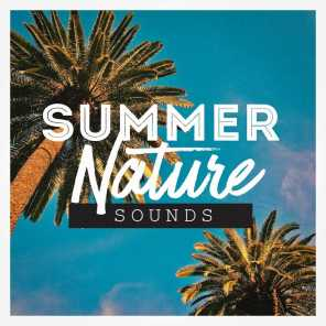 Nature Sounds, Sounds of Nature White Noise for Mindfulness Meditation and Relaxation, Nature Sounds Nature Music