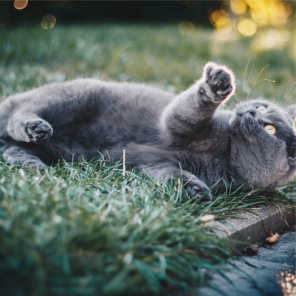 Jazz Music for Cats, Cats Music Zone & Calm Music for Cats