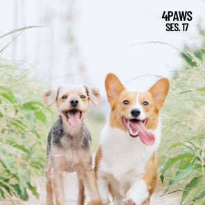 Music For Cats, Pet Care Club & Music for Dog's Ears