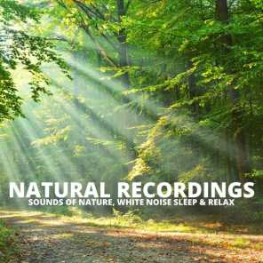 Natural Recordings
