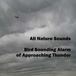 All Nature Sounds