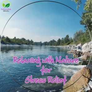 Nature Hub Relaxation