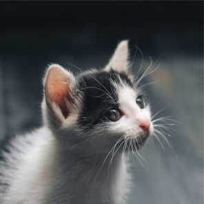 Jazz Music for Cats, Cat Music Therapy & Music for Relaxing Cats