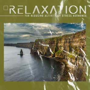 Wellness Sounds Relaxation Paradise