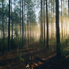 The Nature Soundscapes & Studying Music For Focus