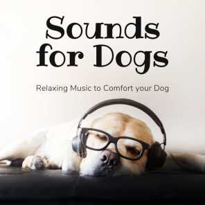 Music for Dogs Collective
