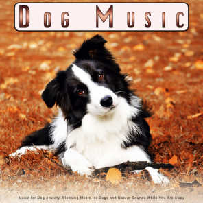 Dog Music, Sleeping Music For Dogs & Dog Music Collective