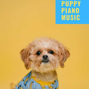 Cat Music, Music For Cats & Dog Music