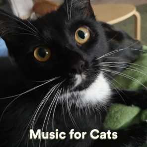 Music For Cats, Cats Music Zone & Cat Music Experience