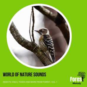 World of Nature Sounds - Insects, Owls, Toads and More from Forest, Vol. 1