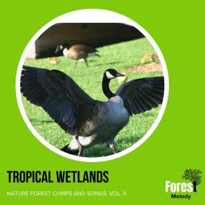 Tropical Wetlands - Nature Forest Chirps and Songs, Vol. 6