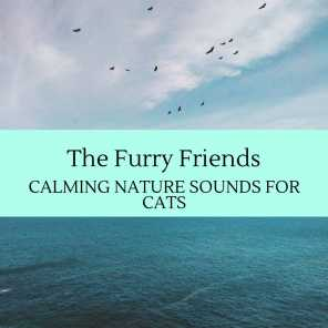 The Furry Friends - Calming Nature Sounds for Cats