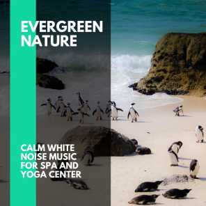 Evergreen Nature - Calm White Noise Music for Spa and Yoga Center