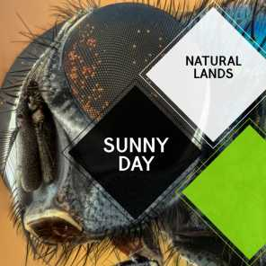 Sunny Day - Natural Lands