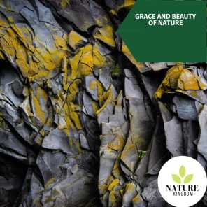 Grace and Beauty of Nature