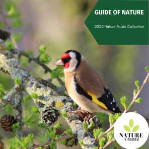 Guide of Nature - 2020 Nature Music Collection