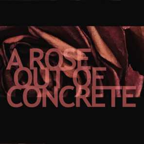 A Rose Out of Concrete