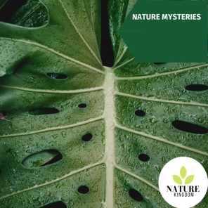 Nature Mysteries