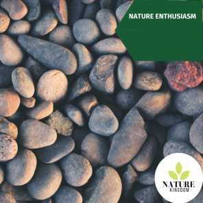 Nature Enthusiasm