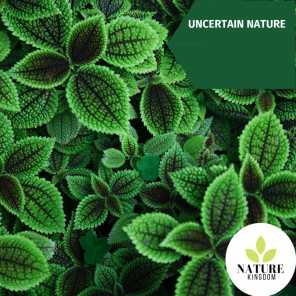 Uncertain Nature