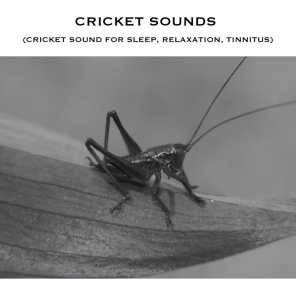 Crickets Chirping Sound Effect - Loopable with No Fade