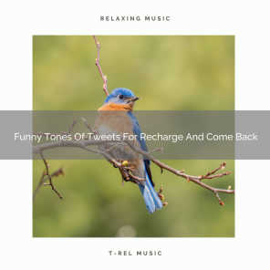 Funny Tones Of Birds For Refresh And Happy Mornings