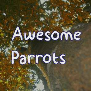 Awesome Parrots