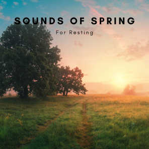 Sounds Of Spring For Resting