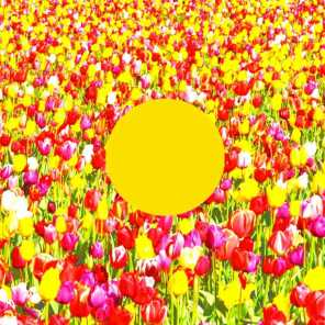 Spring Song (feat. Jeremy Ebell)