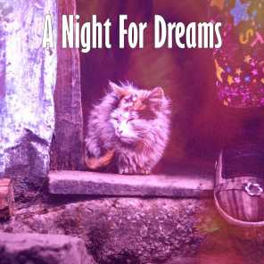 A Night For Dreams