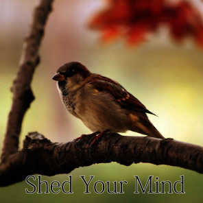 Shed Your Mind