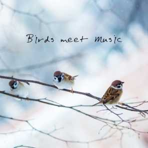 Birds meet Music: 15 Musical Compositions for Sleep, Relaxation and Rest