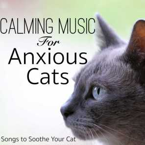 Calming Music for Anxious Cats: Songs to Soothe Your Cat